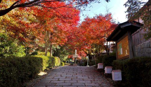 【紅葉シーズン】曼殊院門跡へ行ってきた【京都の寺院】