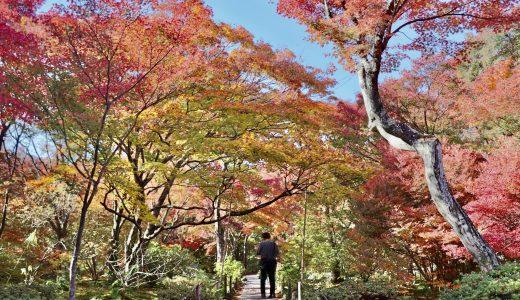 【嵯峨野嵐山/紅葉シーズン】紅葉の名所!宝筐院へ行ってきた【京都の寺院】
