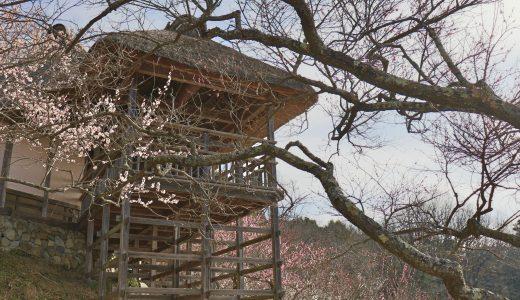 【つくば】見頃の梅を堪能!神社では梅まつり限定御朱印も!筑波山梅まつりへ行ってきた【茨城の観光地】