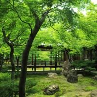 【京都旅行ブログ】2泊3日の京都旅行!新緑の季節の京都旅#2