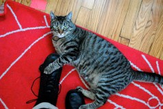 Kiko loves my combat boots too