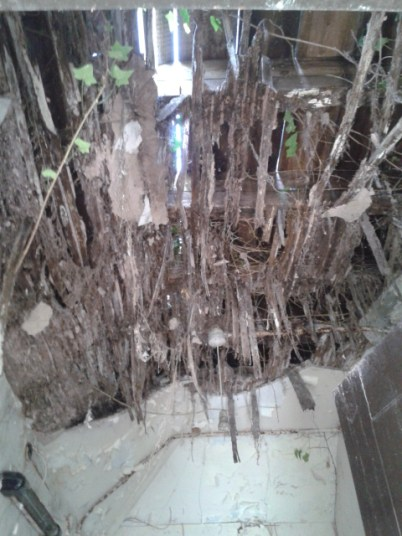 Rotten Roof