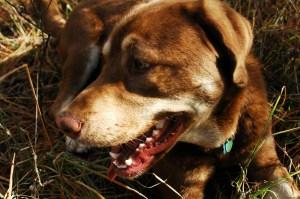 662524_61502046 dog