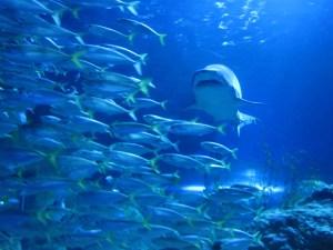 1443079_71656057 shark