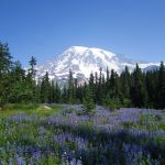Mount Rainier National Park 2012: Paradise Side