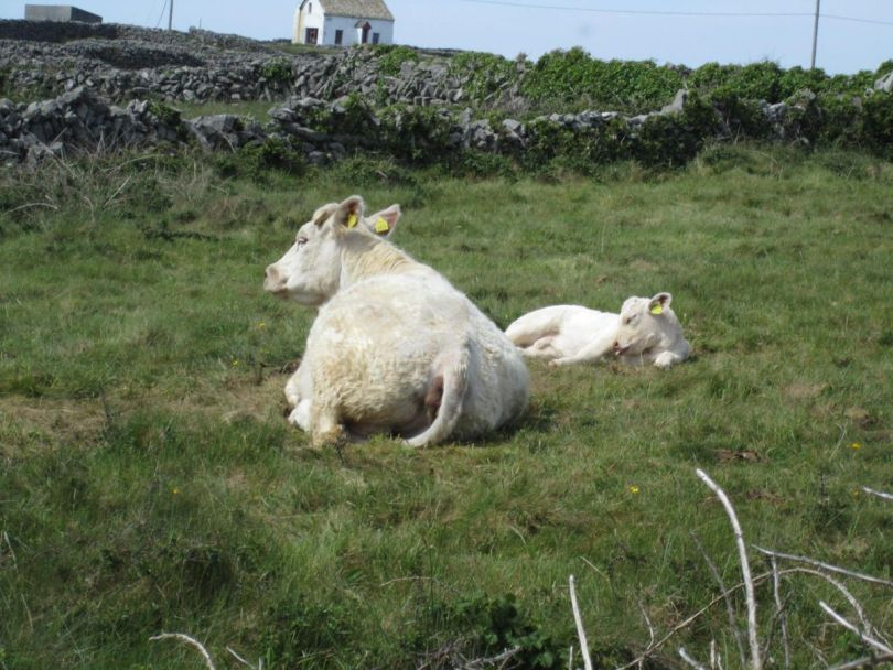 Inishmore Aran Islands Ireland