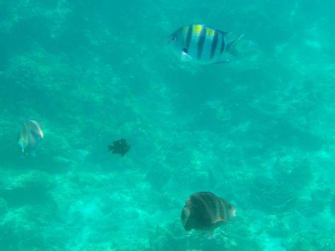 snorkeling koh phi phi Thailand 051