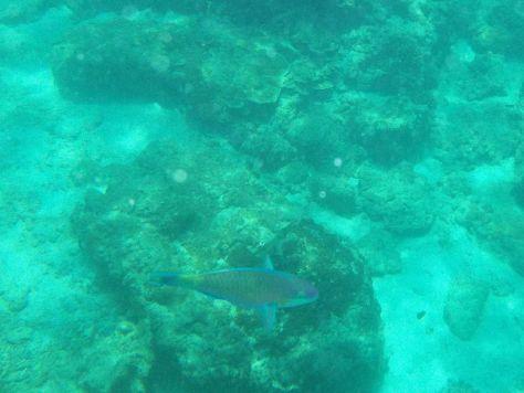 snorkeling koh phi phi Thailand 052