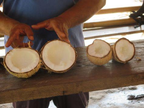 macapuno coconuts Thailand 807