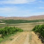 Wine Tasting in Yakima Valley, WA 2014: Rattlesnake Hills