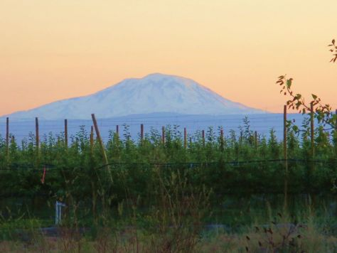 Mt Adams sunset Yakima Valley WA