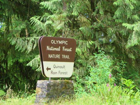 Quinault rain forest WA