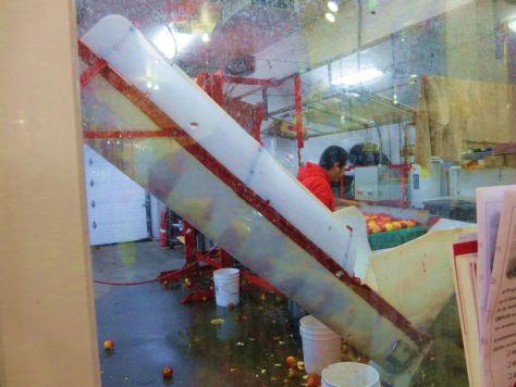 Apple conveyor belt Orondo Cider Works Chelan WA