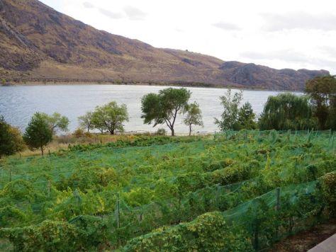 View of vineyards Rio Vista Winery Chelan