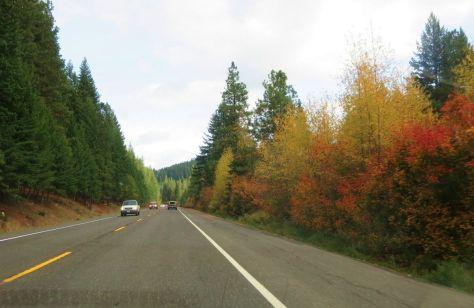 Highway 2 Washington fall leaves