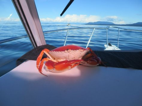 Captain Spencer's dashboard crab