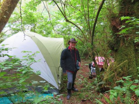 Camping in the Hoh Rainforest
