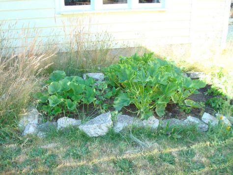 Our first garden: pumpkin, zucchini, potatoes