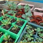 Carthay Center School Garden