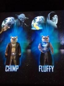 chimpandfluffy2