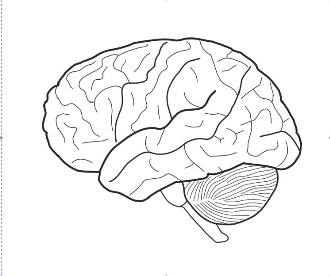 Brain Diagram Front View Sketch Coloring Page