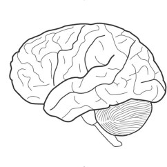 Blank Cell Diagram Worksheet Server Wiring Brain Front View Sketch Coloring Page