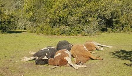 Trasladaron animales desde el NORTE para salvarlos y MURIERON en su nuevo hogar