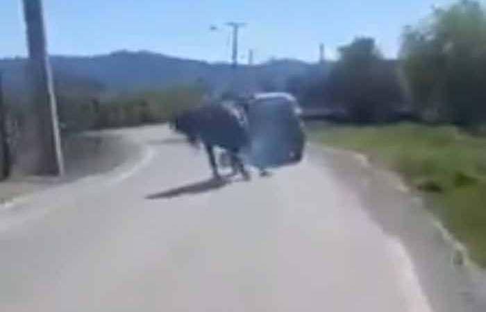[Video] Funan a sujeto por brutal maltrato animal en Curicó