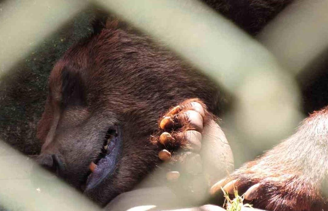 Denuncian MALTRATO ANIMAL en Zoológico Nonguén, ubicado en Concepción