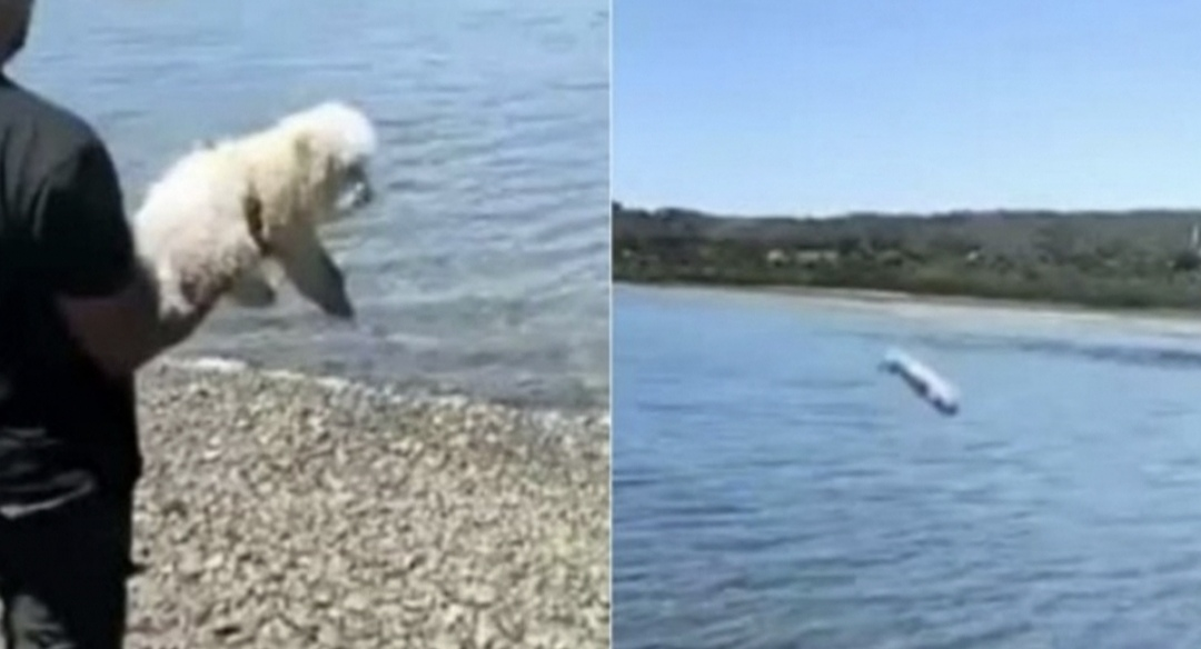 VIDEO: Graban a hombre LANZANDO a PERRITO POODLE al mar en CHILOÉ