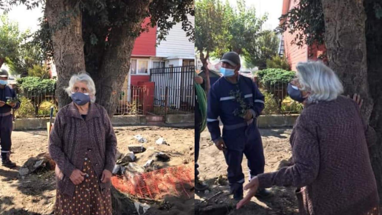 TODOS SOMOS MARGARITA!! Abuelita SE NIEGA a qué municipio de Talcahuano LE CORTE ARBOL frente a su casa