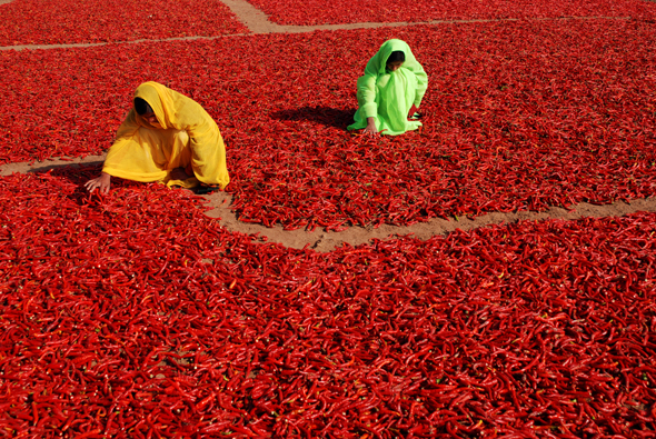 Two Indian women are shuffling red pepper / Indiai nők forgatják a száradó chilit
