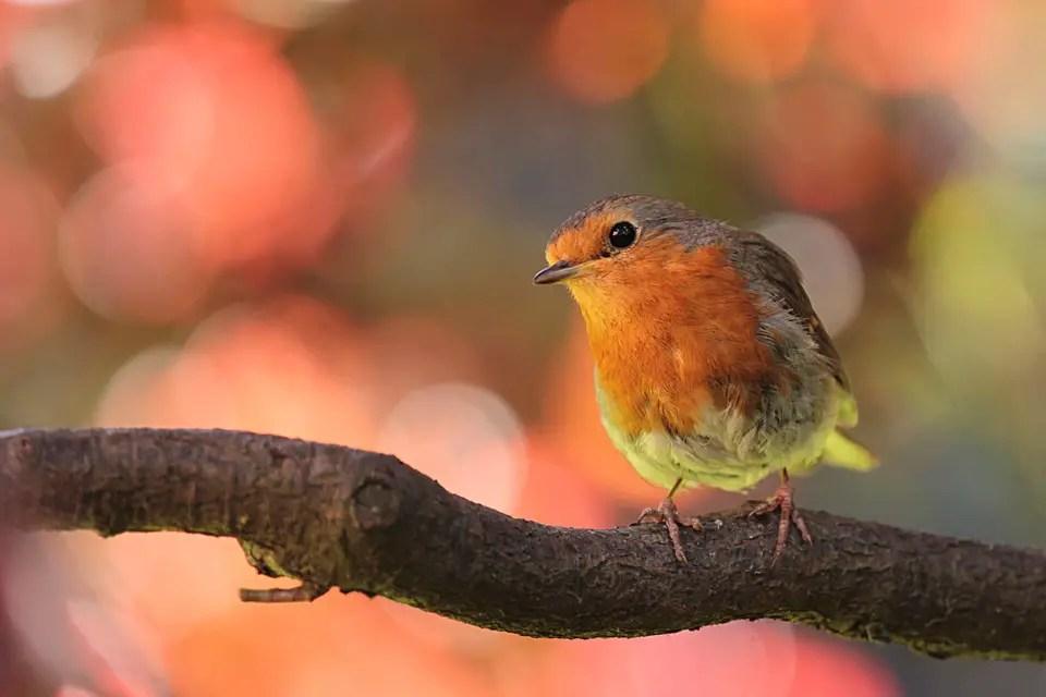 Autumn garden makeover a robin perched on a branch