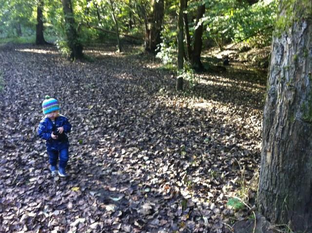 Lucas walking towards me in woodland