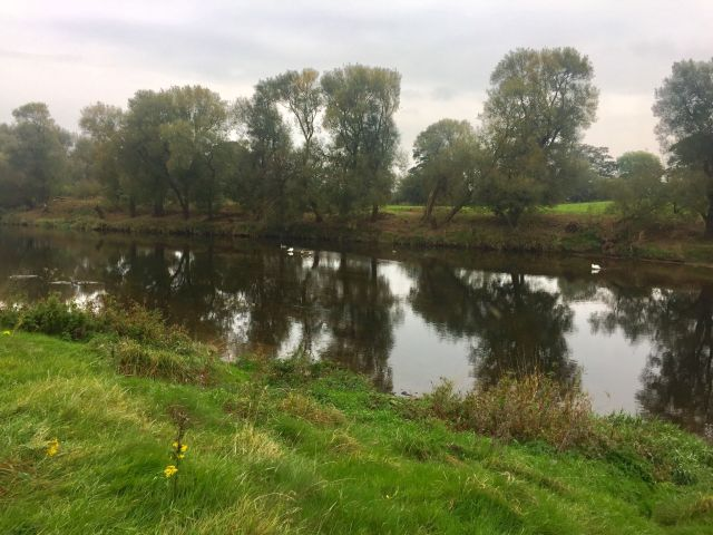 #WalkWithWynsors at Brockholes Nature Reserve field alongside the river ribble