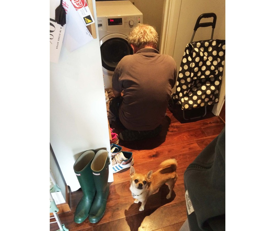 how to train your dog at home with plumber