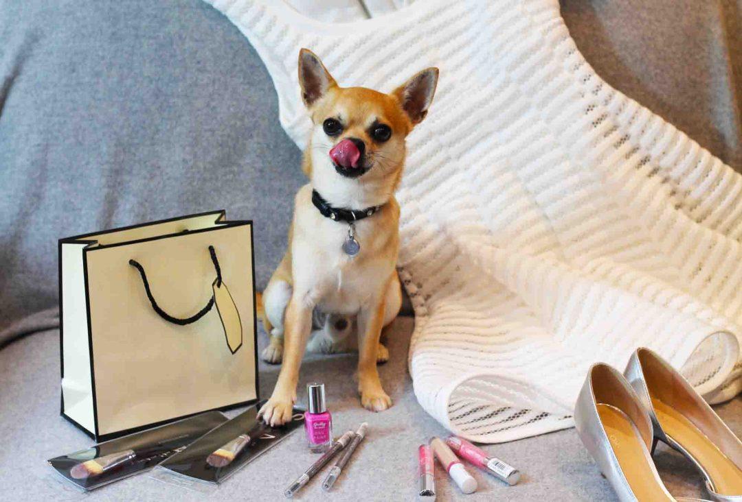 Dog Fashionista at London Fashion Week
