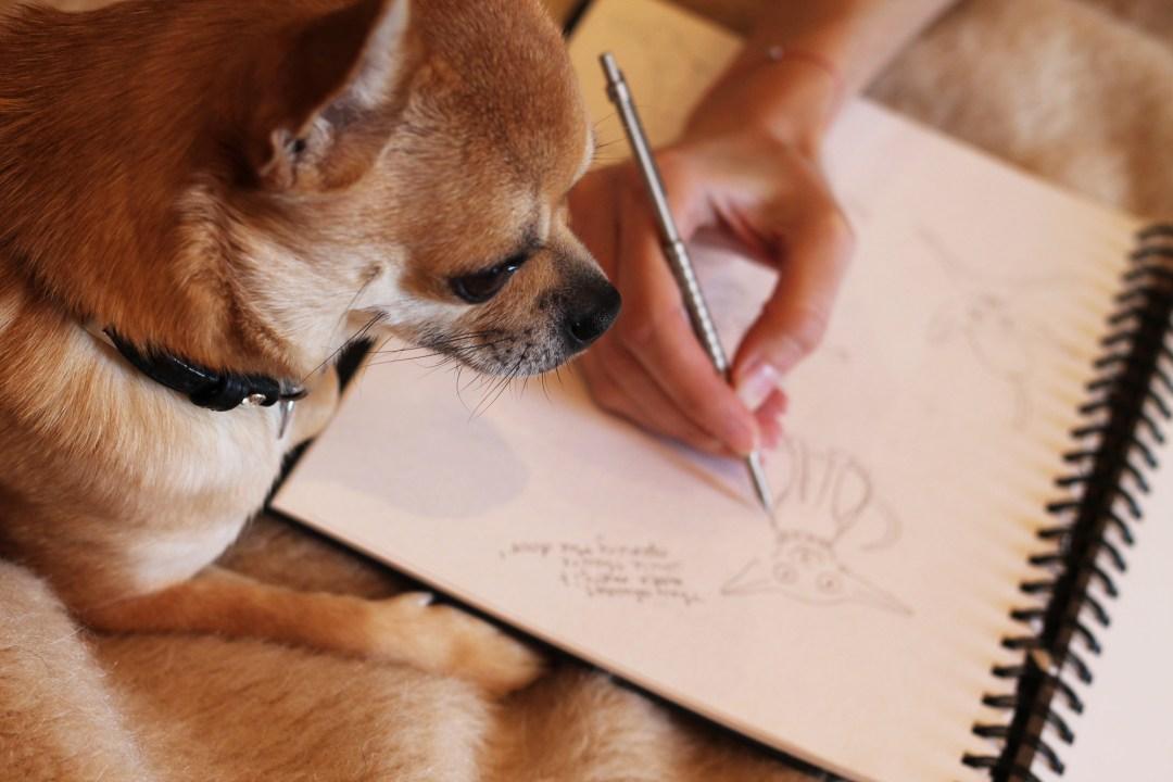 Chilliwawa illustrations dog blog