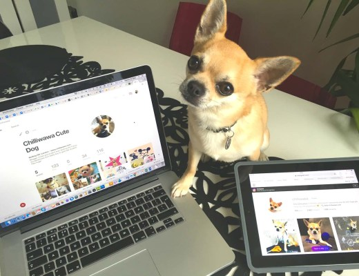 Chilliwawa the media dog on Pinterest