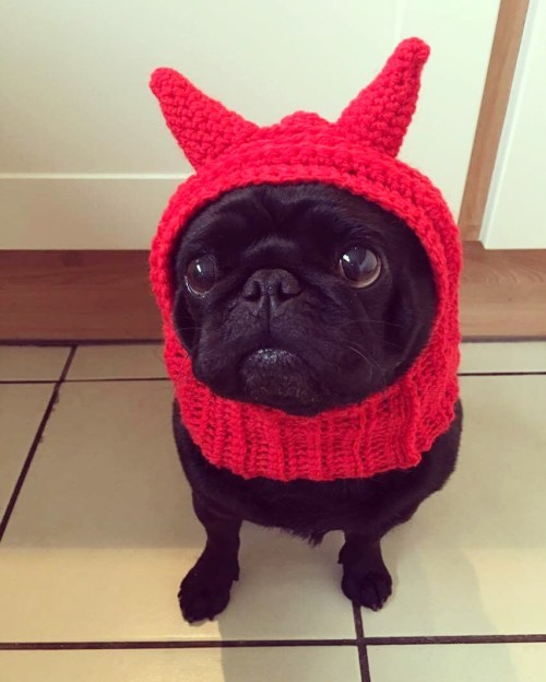 Devil dog hat Halloween costume