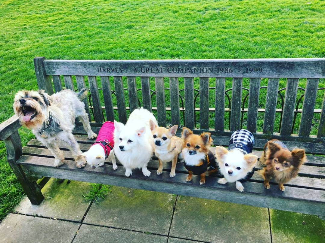 Chilli Chihuahua and his friends