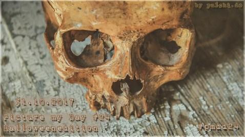 Logo des Picture my Day Day 24 - Ein Schädel liegt ohne Unterkiefer auf einem Tisch