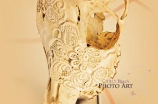 Decorative Skulls 003