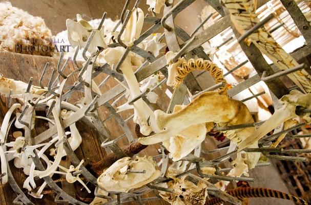 Decorative Skulls 004