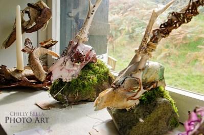 Decorative Skulls 006