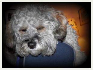 Scrappy Dog Asleep On High