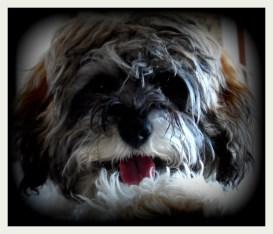 Scrappy Dog Posing