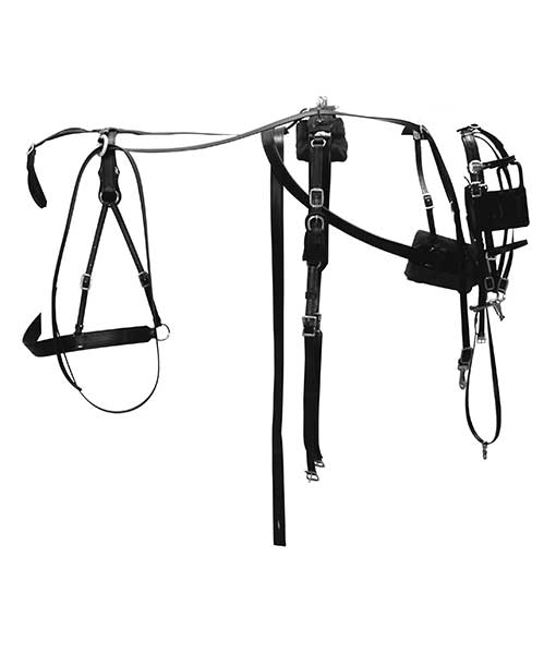 Chimacum Tack: Horse Tack & Harness Supplies for animals