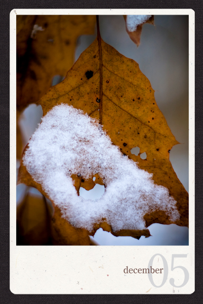 05_leafsnow.jpg