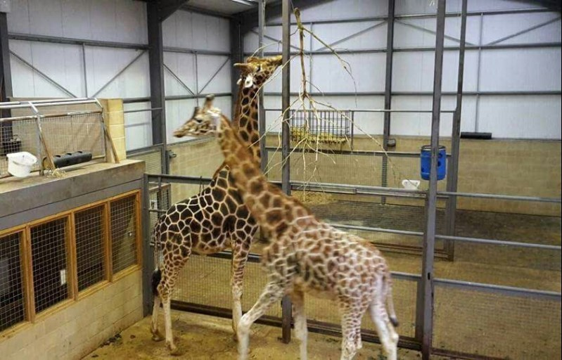 The Cotswold Wildlife Park and Gardens